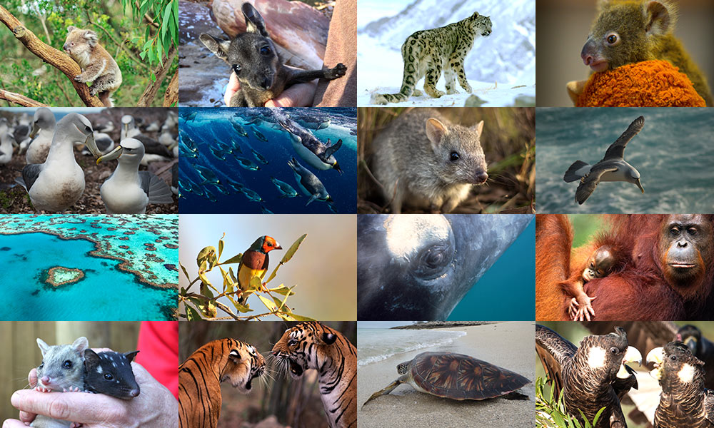 Collage of species images by Patrick Hamilton; Georgina Steytler ; Matthew Newton; Aleks Terauds; National Geographic Creative / Paul Nicklen; Shutterstock / GunnerL; Mike Fidler; Stephanie Todd / JCU; naturepl.com / Anup Shah; Reinhard / ARCO