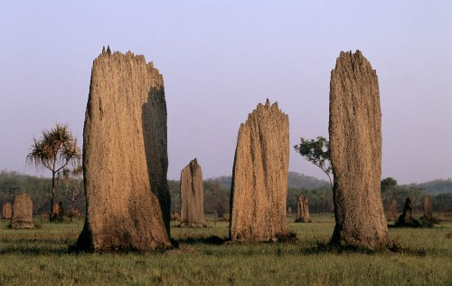 Magnetic termite mounds © Martin Harvey / WWF