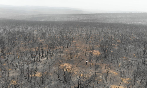 Aerial of the Kangaroo Island bushfire aftermath in 2020 © WWF-Australia / Sii Studio
