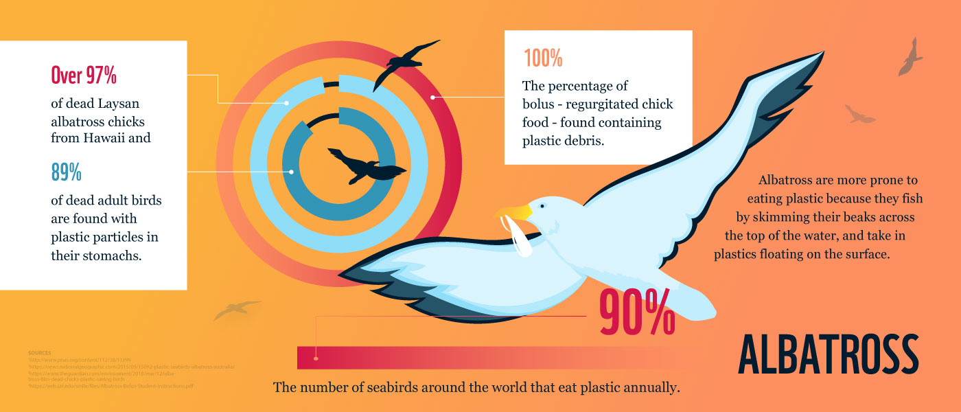 90% of seabirds around the world eat plastic annually © WWF-Australia