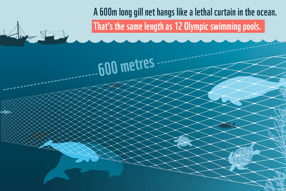 A 600m gill net hangs like a lethal curtain in the ocean © WWF-Aus / Jessica Macleod
