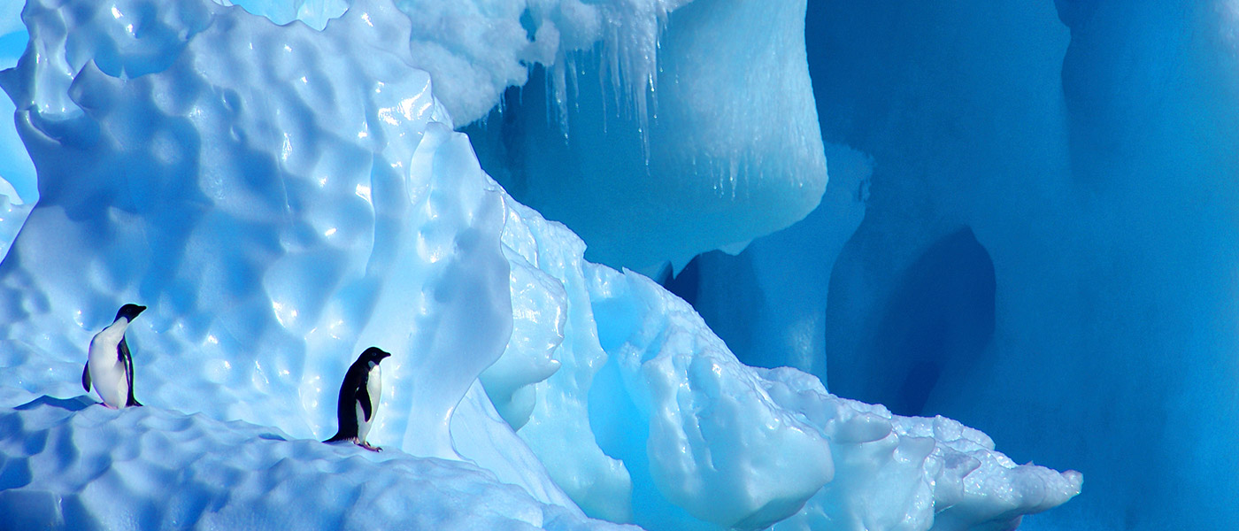 Two Adelie penguins on iceberg, Antarctica © naturepl.com / Edwin Giesbers / WWF