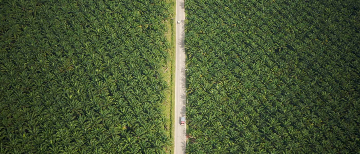 Aerial view of road running through oil palm plantation. Sungai Petani vicinity, Kedah, Malaysia. May 2006 © naturepl.com / Tim Laman / WWF