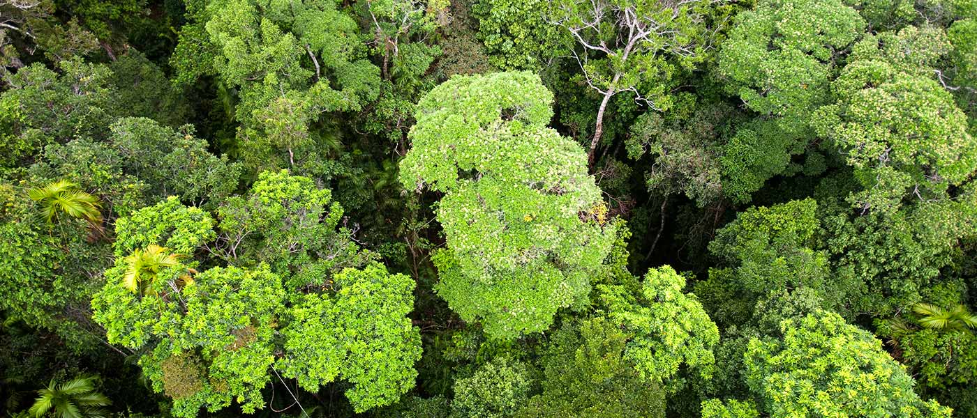 Forest canopy of the Daintree rainforest in northern Queensland © Global Warming Images