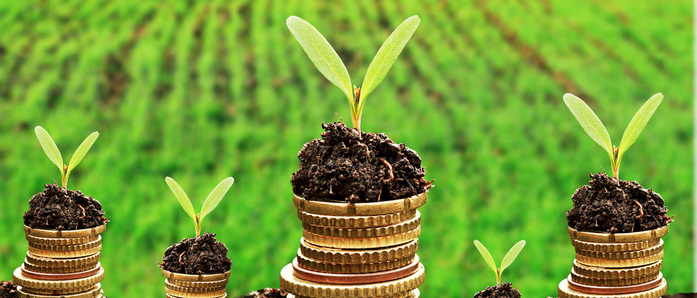Currency and money in soil with young plant seedlings © Shutterstock / isak55 / WWF