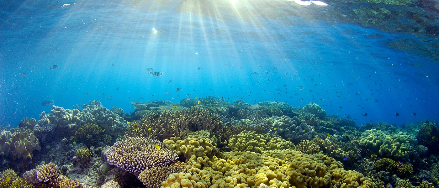 Sunlight illuminates the coral at the Great Barrier Reef, Queensland, Australia © Troy Mayne