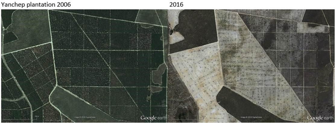 Google Earth image of Yanchep pine plantations, Western Australia in 2002 and 2016 © 2016 DigitalGlobe