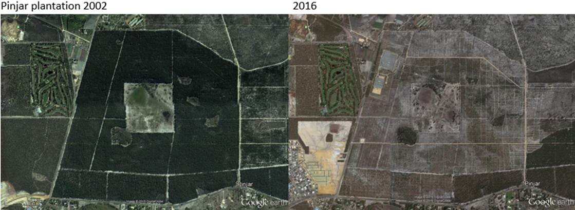 Google Earth image of Pinjar pine plantations, Western Australia in 2002 and 2016 © 2016 DigitalGlobe