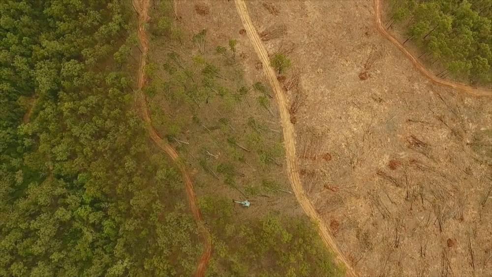 Tree-clearing for urban expansion near Ipswich, southeast Queensland © Supplied