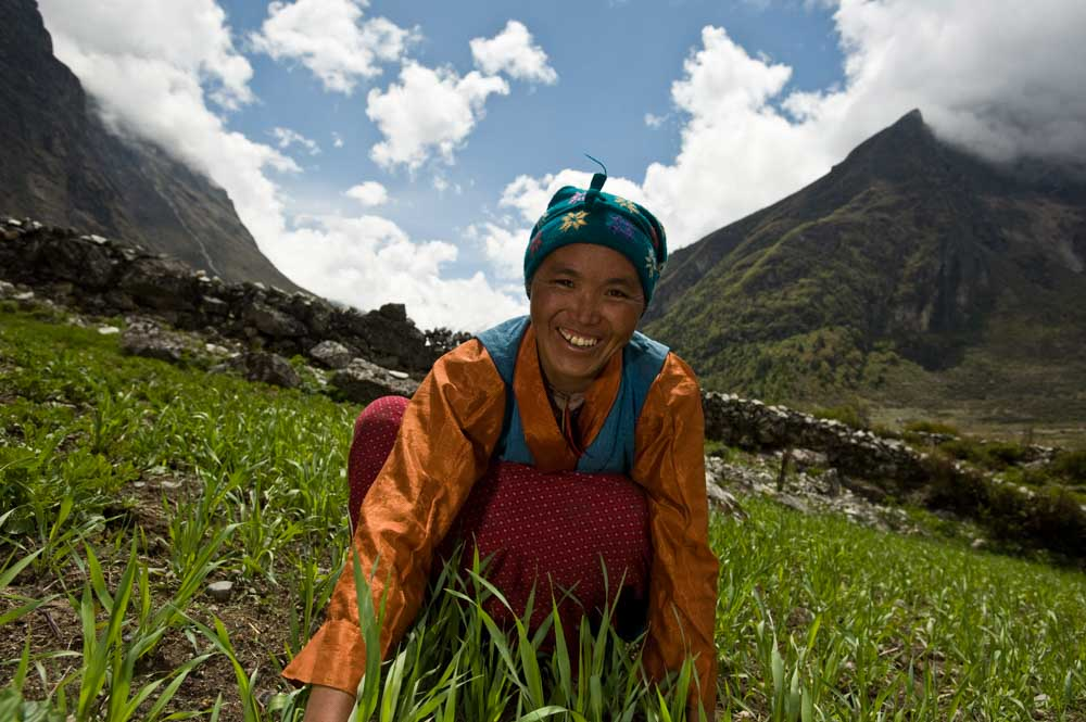 A local Tamang woman working in a field to harvest her crop, Langtang National Park, Nepal © Simon de Trey-White / WWF-UK