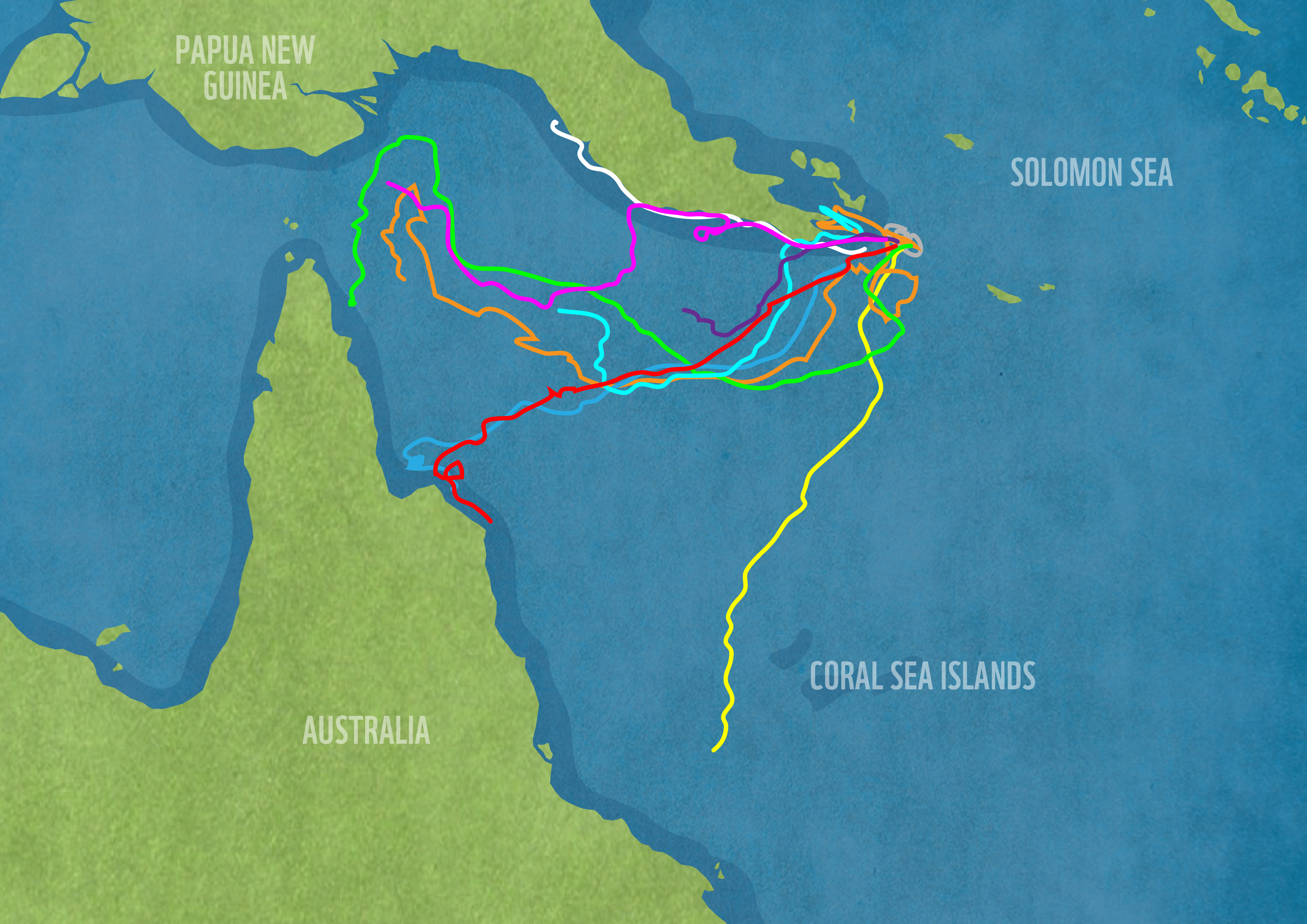 """Coral Sea is a """"hawksbill highway"""" for critically endangered turtles ..."""