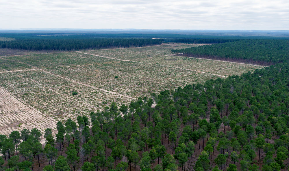 Aerial view cleared pine plantations in Gnangara-moore River State Forest. Yanchep, Western Australia, February 2017 © WWF-Aus / Pixel Pilot