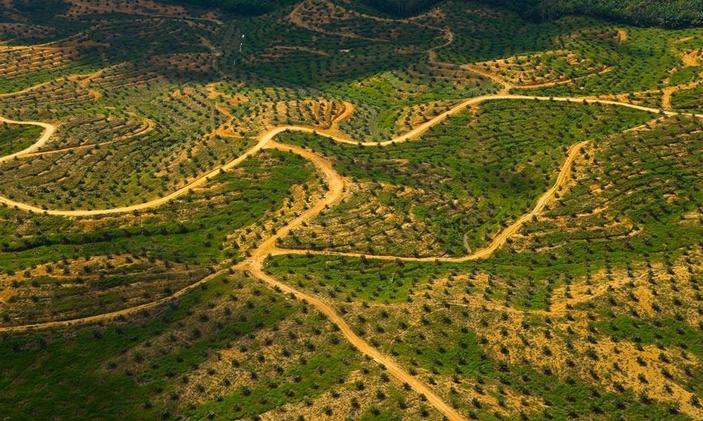 Aerial view of palm oil plantation on deforested land, Sabah, Borneo, Malaysia © naturepl.com / Juan Carlos Munoz / WWF