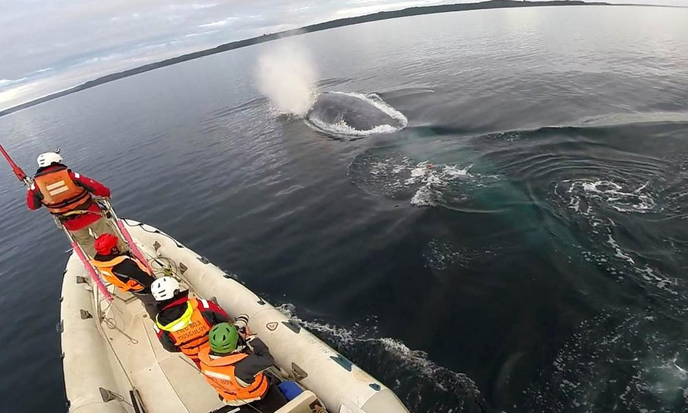 Blue whale (Balaenoptera musculus) surfacing in front of the WWF research team, Gulf of Corcovado © WWF / Francisco Viddi