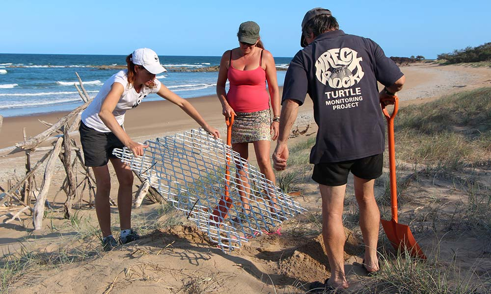 Turtle nest protection device trialled at Wreck Rock Beach, Queensland © Tomo Eguchi / WWF-Aus