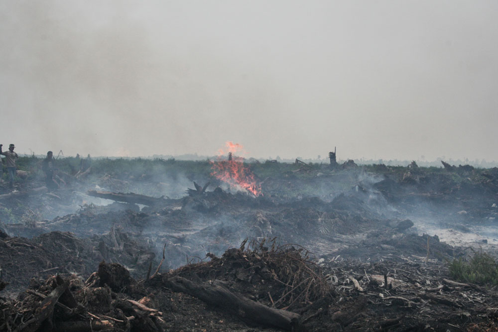 A huge peat swap is burnt in Indonesia © WWF-Indonesia / Samsul Komar