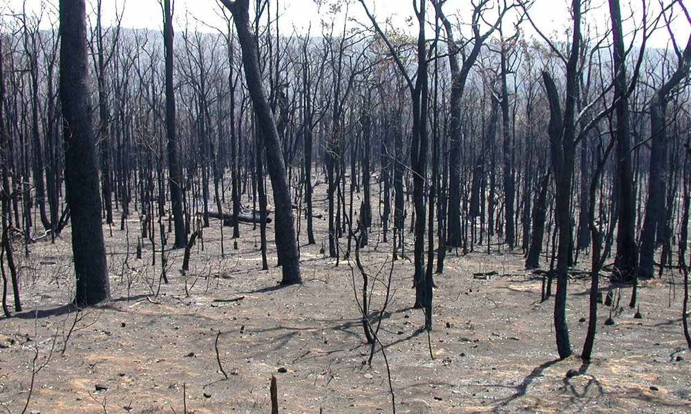 Intensely burnt forest, showing complete loss of vegetation structure. Western Australia © Karlene Bain / WWF-Aus
