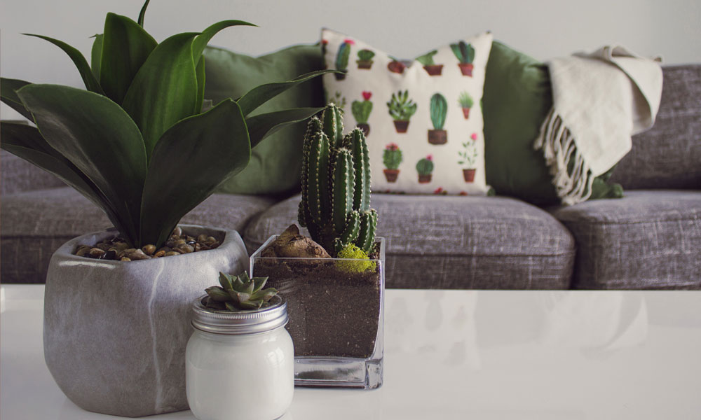 Cactus home decor. Photo by Designecologist on Pixabay
