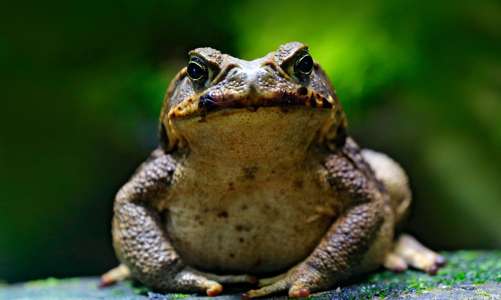 Fact Toad