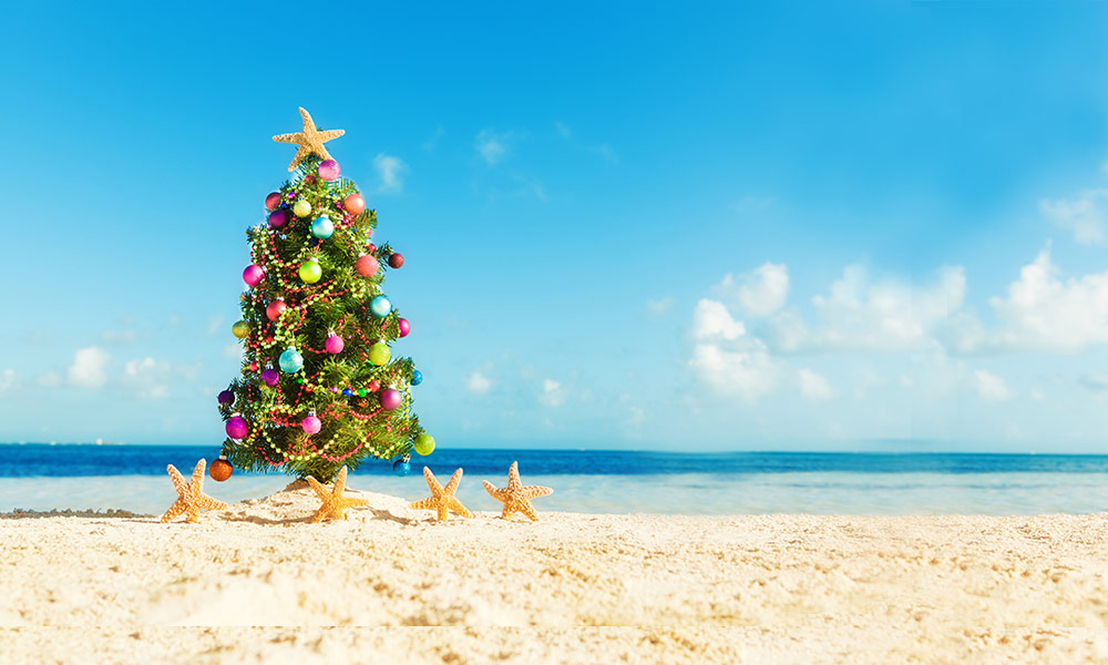What's the best Christmas tree you can buy? – WWF-Australia - WWF-Australia