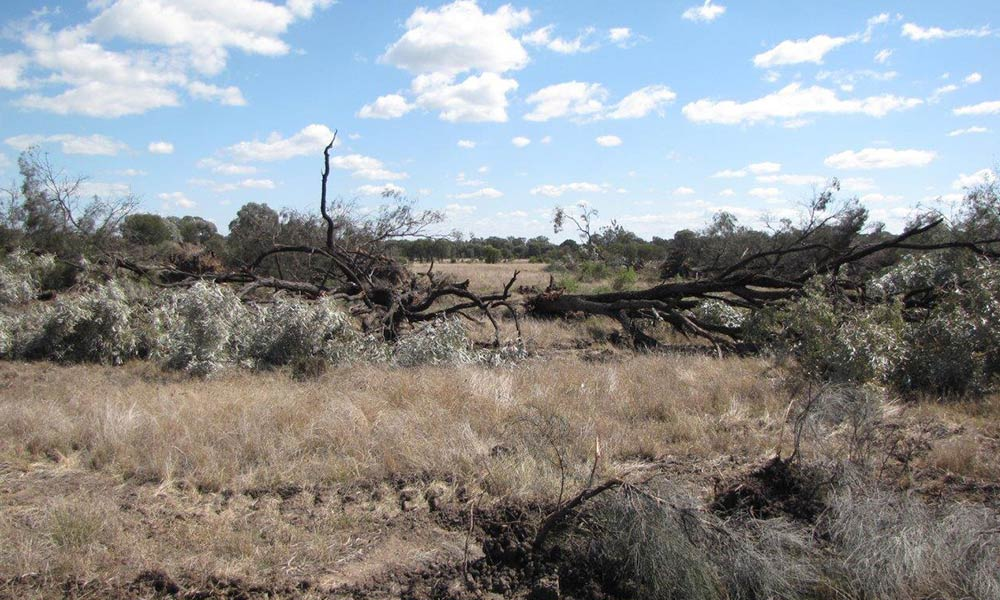 Clearing of woodlands in northwest New South Wales