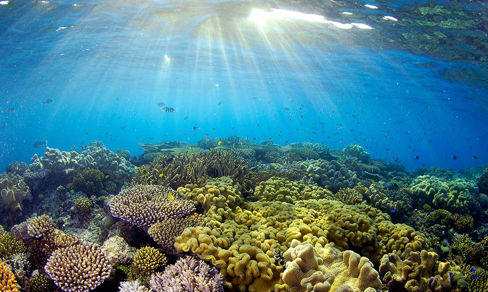Sunlight illuminating coral, Great Barrier Reef © Troy Mayne