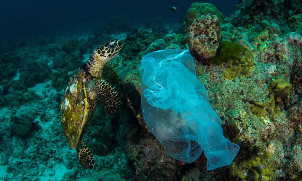 A Hawksbill turtle and a plastic bag in Similan Islands, Thailand © Shutterstock / Krzysztof Bargiel / WWF