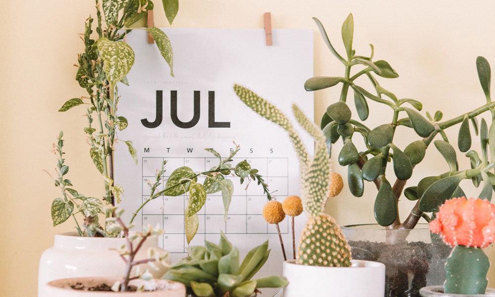 July calendar with plants. Photo by Maddi Bazzocco on Unsplash