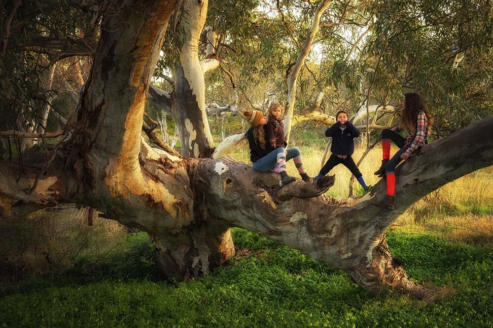Kids playing in a tree © Didi Photos / WWF-Aus
