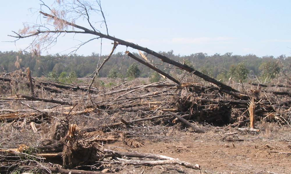 Landclearing next to Boondandilla State Forest in Queensland © Martin Taylor / WWF-Aus