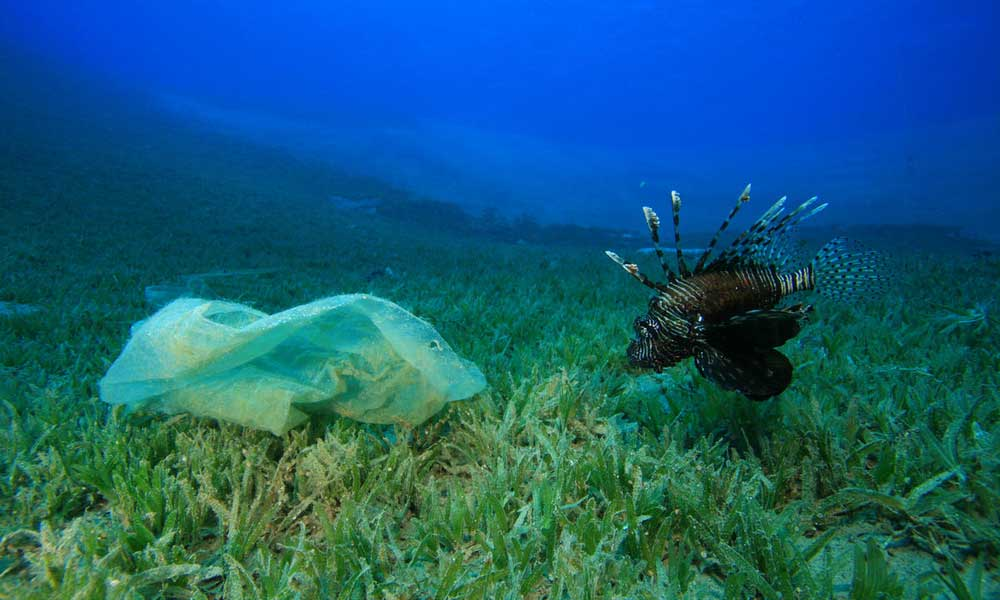 A lionfish with a plastic bag in the ocean © Shutterstock / Rich Carey / WWF