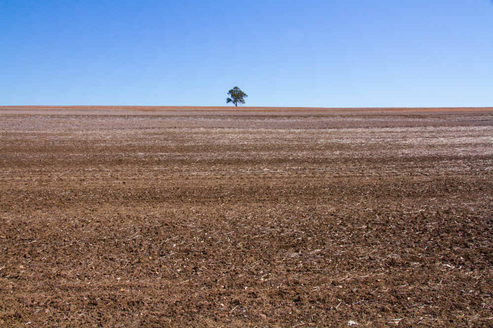 Lone tree on a hill above fallow wheatfield, north of Warialda, northwestern New South Wales © WWF-Aus / Stuart Blanch