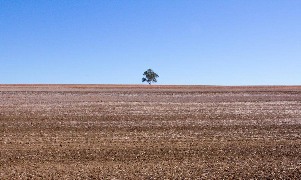 Lone tree on hill above fallow wheatfield, north of Wariada, New South Wales © WWF-Aus / Stuart Blanch