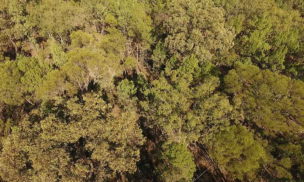 Aerial view of native forest in the Miles area on the Western Downs, Queensland, May 2017. Photo supplied.