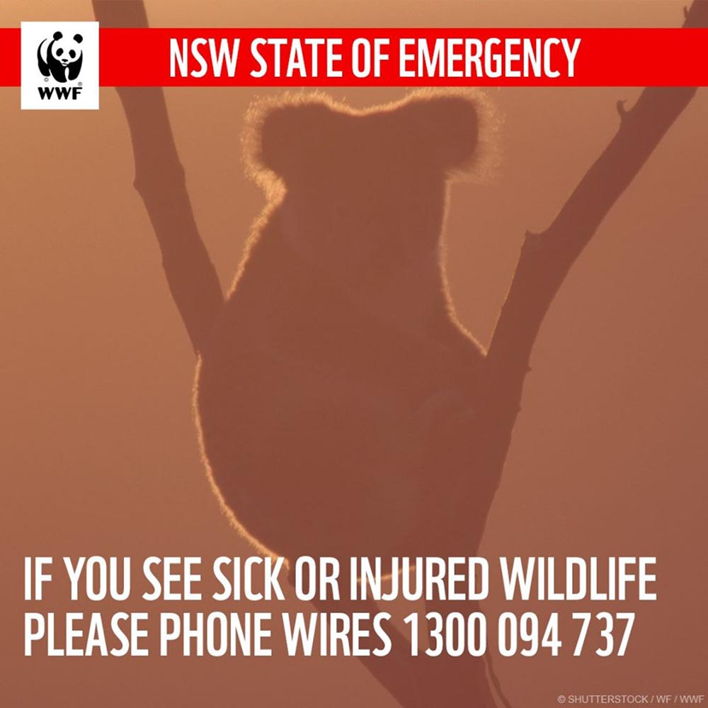 NSW state of emergency WIRES