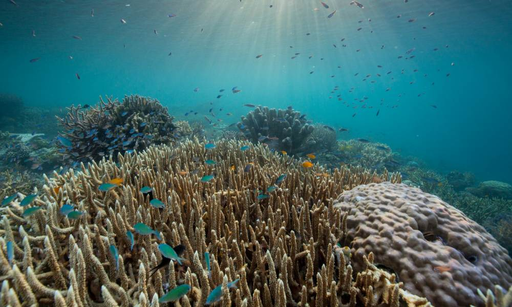Few reefs are as pristine as this - worldwide, half of all shallow coral reefs have already died © Oliver Scholey/Silverback/Netflix