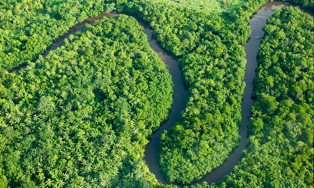 Rainforest on Fiji © Global Warming Images / WWF