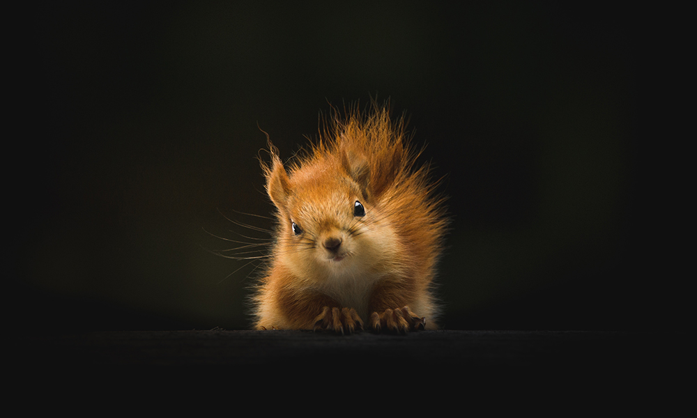 Red squirrel, Gällivare, Sweden by Geran de Klerk / Unsplash