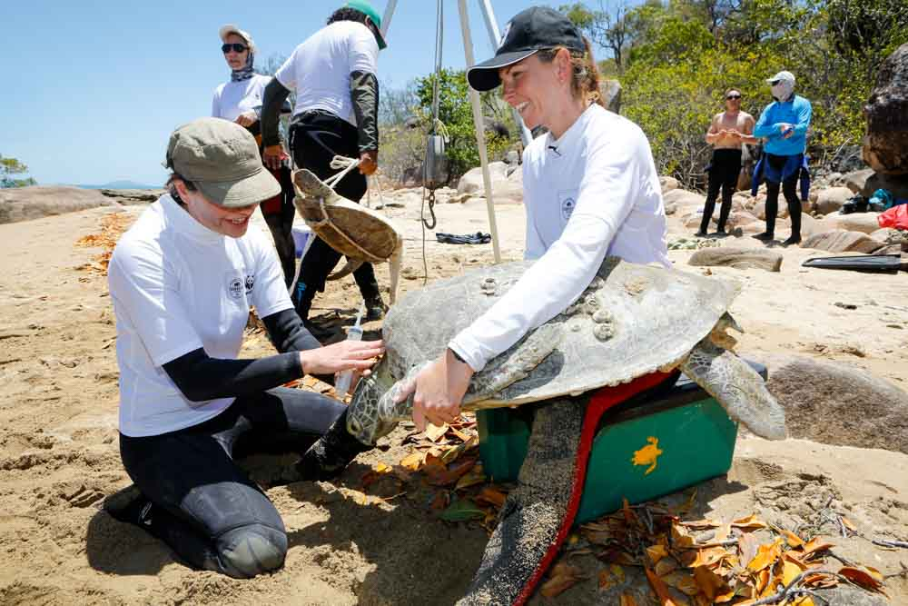 The Rivers to Reef to Turtles team processing turtles © Cameron Laird / Accolade Wines Australia Limited / WWF-Aus