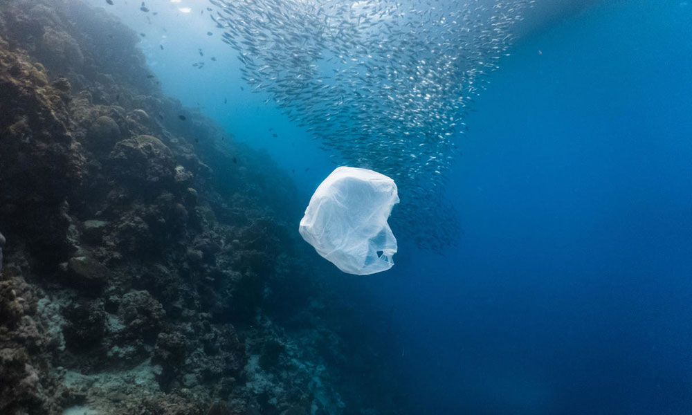 Single-use plastic bag floating with a school of fish in a shallow reef © Shutterstock / John Cuyos / WWF