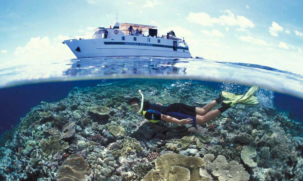 A snorkeler explores a reef in the Coral Sea © markspencer.com.au