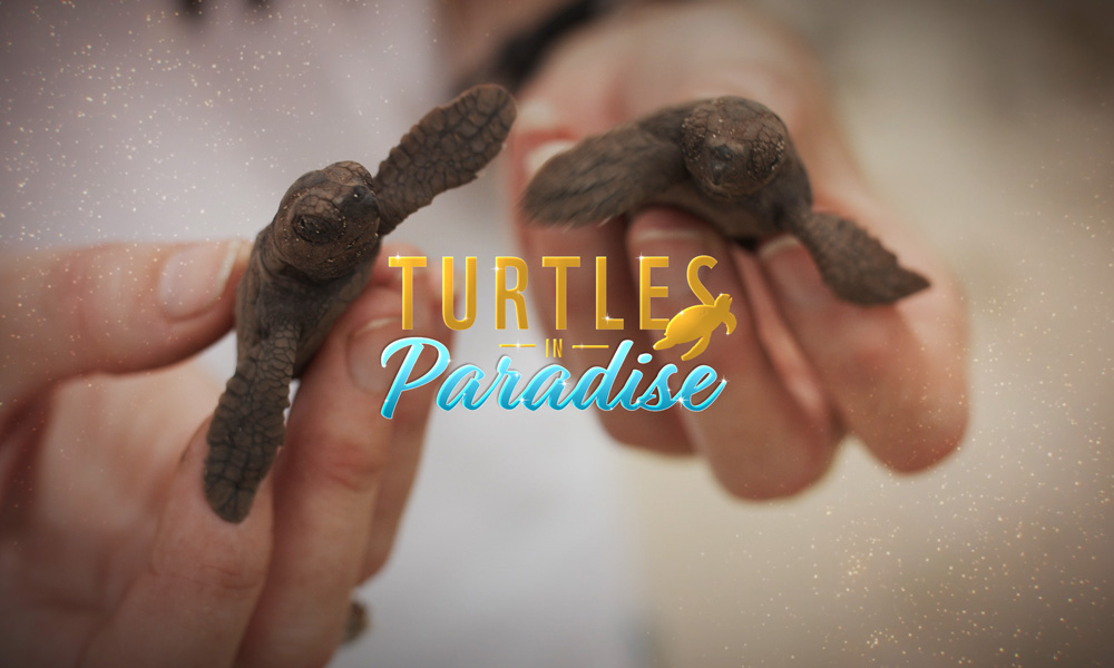 Turtles in Paradise © WWF-Australia