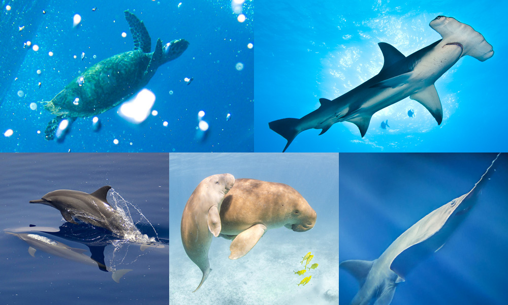 Which marine species are you © WWF-Australia