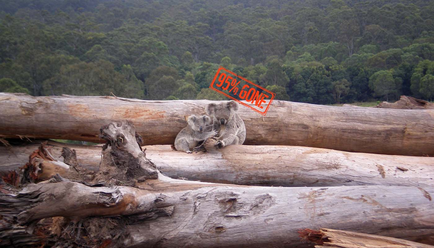 Koala mother and joey seeking refuge on a bulldozed log pile © Briano / WWF-aus