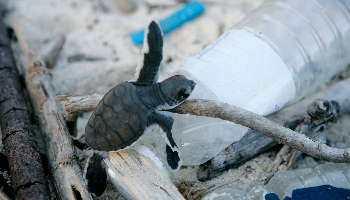 Baby turtle hatchling climbing over plastic bottle, Juani Island, Tanzania © Brent Stirton / Getty Images / WWF-UK