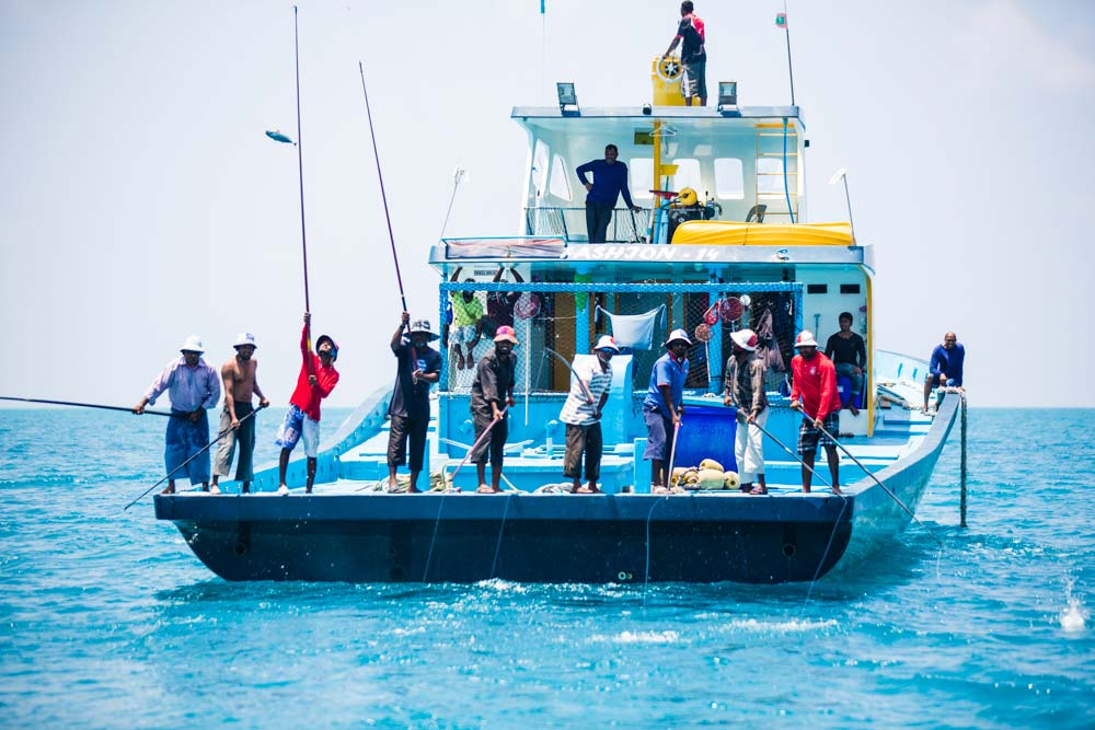 MSC Maldives skipjack fishery © Nice and Serious / MSC