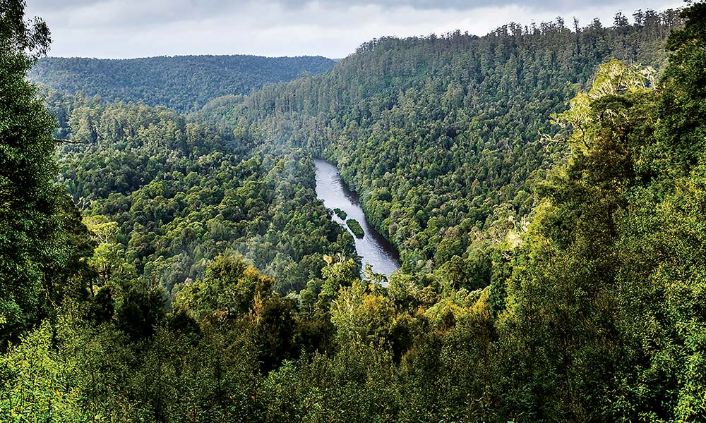 The Tarkine forest from Sumac Lookout © Carol Haberle