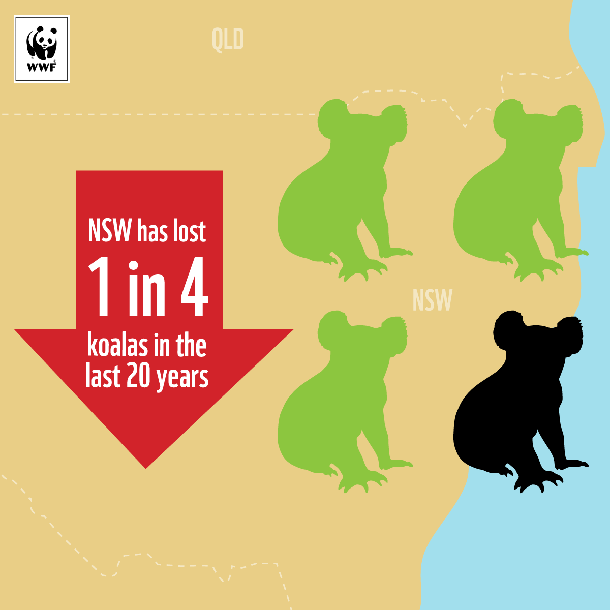 NSW has lost 1 in 4 koala in the last 20 years