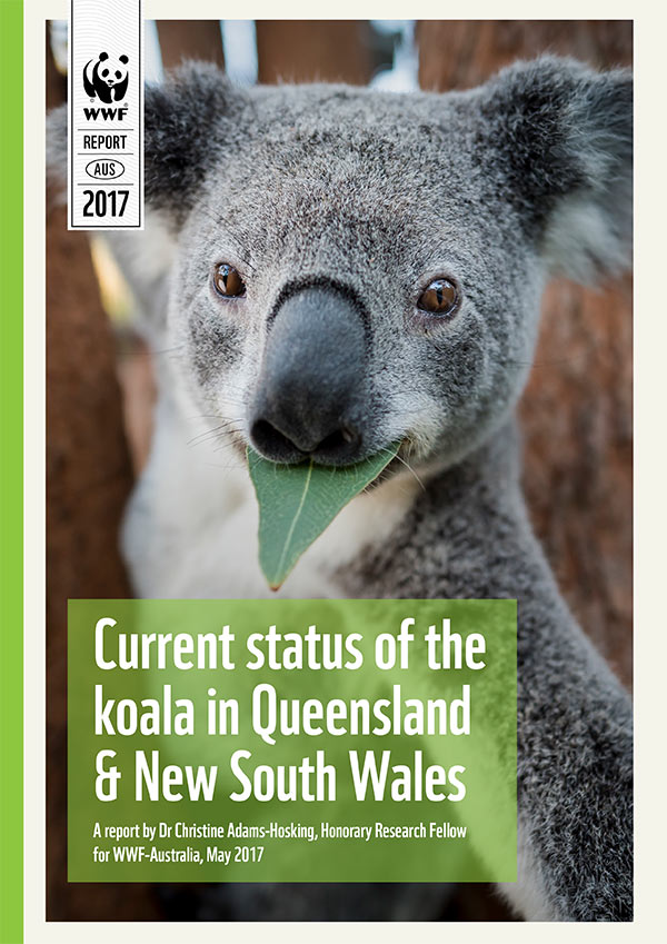 Current status of the koala in Queensland and New South Wales