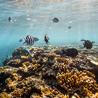 Reef crest dominated by robust branching corals and coralline algae, Great Barrief Reef © WWF / James Morgan